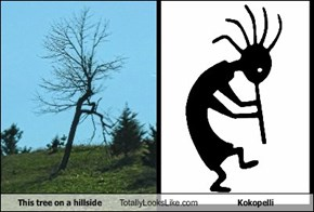 This tree on a hillside Totally Looks Like Kokopelli
