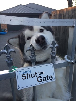 Don't Listen to the Sign, Human