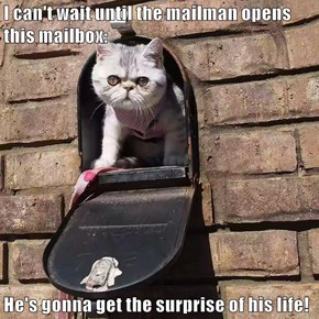 I can't wait until the mailman opens this mailbox:  He's gonna get the surprise of his life!