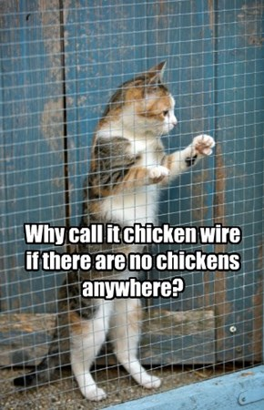 Why call it chicken wire if there are no chickens anywhere?