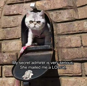 My secret admirer is very serious.  She mailed me a LOLcat.