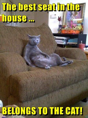 The best seat in the house ...  BELONGS TO THE CAT!