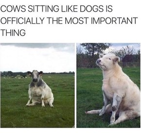 What if Dogs Have Been Sitting Like Cows This Whole Time?