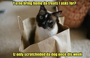 Y u no bring home da treats I asks for?