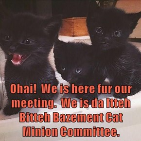 Ohai!  We is here fur our meeting.  We is da Itteh Bitteh Bazement Cat Minion Committee.