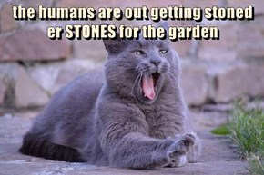 the humans are out getting stoned                        er STONES for the garden