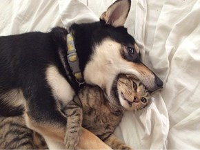 """We're Just Playing a Game of """"Hide the Kitty"""" Nothing to See Here"""