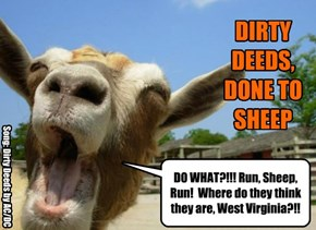 DO WHAT?!!! Run, Sheep,  Run!  Where do they think they are, West Virginia?!!