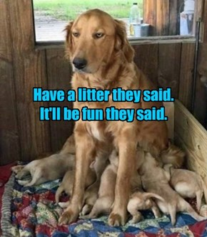 Have a litter they said. It'll be fun they said.