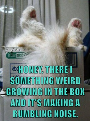 HONEY, THERE I SOMETHING WEIRD GROWING IN THE BOX AND IT'S MAKING A RUMBLING NOISE.