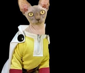 One-Scratch Cat
