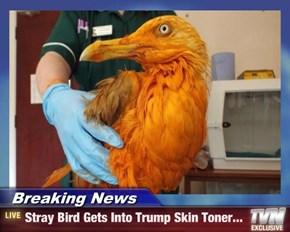 Breaking News - Stray Bird Gets Into Trump Skin Toner...