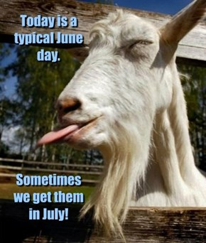 If March comes in like a loin, June comes in like an old goat!