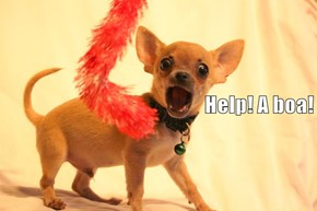 Gypsy Rose Lee's Chihuahua Lived In Constant Terror