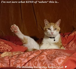 I'm not sure what KIND of *salute* this is..             I'm thinking Caturday Salute? LoL ♥
