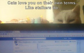 Cats love you on their own terms.         Like stalkers do.
