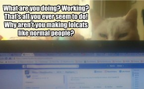 What are you doing? Working? That's all you ever seem to do! Why aren't you making lolcats like normal people?