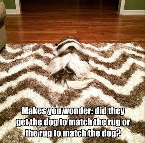 Makes you wonder: did they get the dog to match the rug or the rug to match the dog?