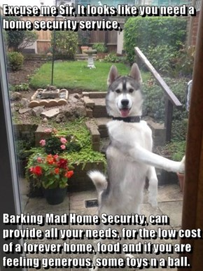 Excuse me Sir, It looks like you need a home security service,  Barking Mad Home Security, can provide all your needs, for the low cost of a forever home, food and if you are feeling generous, some toys n a ball.