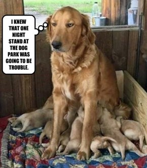 I KNEW THAT ONE NIGHT STAND AT THE DOG PARK WAS GOING TO BE TROUBLE.
