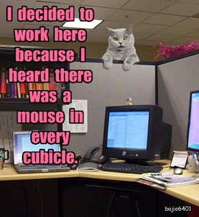 I  decided  to  work  here  because  I  heard  there  was  a  mouse  in  every  cubicle.