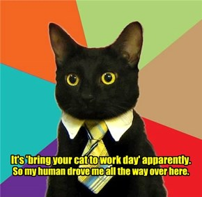 It's 'bring your cat to work day' apparently.