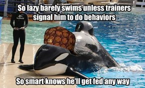 So lazy barely swims unless trainers signal him to do behaviors