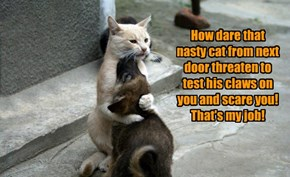 How dare that nasty cat from next door threaten to test his claws on you and scare you! That's my job!