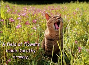 A field of flowers made Dorothy drowsy.