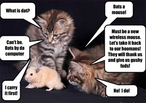 Kittens without a clue