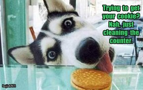 Trying  to  get  your  cookie?   Nah,  just  cleaning  the  counter.