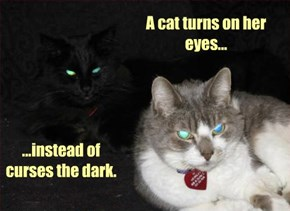 A cat turns on her eyes...