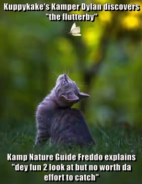 "Kuppykake's Kamper Dylan discovers ""the flutterby""   Kamp Nature Guide Freddo explains ""dey fun 2 look at but no worth da effort to catch"""