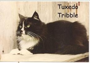 Tuxedo Tribble