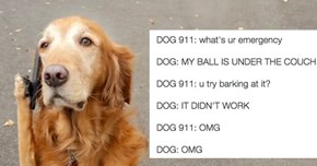 Ever Imagined What Would Happen If A Dog Called 911? This Guy Did...