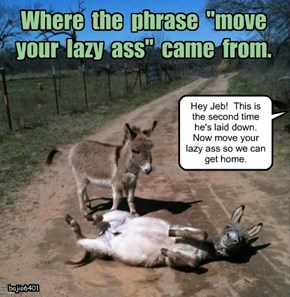 "Where  the  phrase  ""move  your  lazy  ass""  came  from."