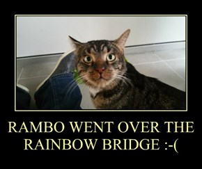 RAMBO WENT OVER THE RAINBOW BRIDGE :-(