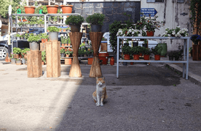 A Photographer From Beirut Captured a Day in the Life of a Stray Cat