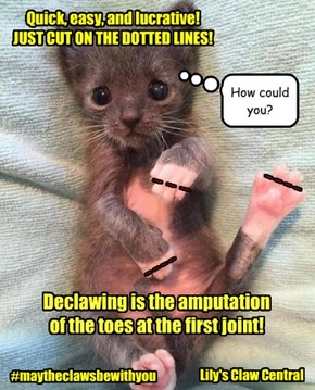 Declawing is an abomination!