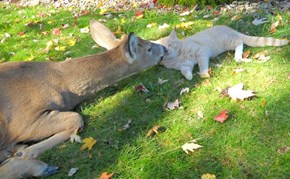This Cat and Deer Have an Adorable Friendship