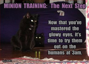 Basement Cat Training Camp