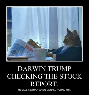 DARWIN TRUMP CHECKING THE STOCK REPORT.