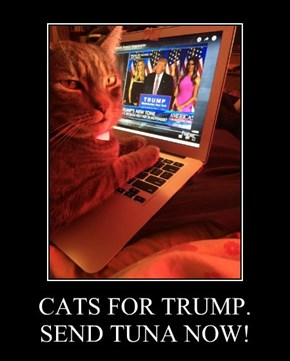CATS FOR TRUMP. SEND TUNA NOW!