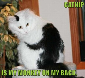 CATNIP  IS MY MONKEY ON MY BACK.