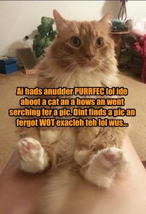 Ai hads anudder PURRFEC lol ide aboot a cat an a hows an went serching fer a pic. Dint finds a pic an fergot WOT exacleh teh lol wus...