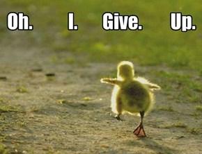 Li'l Daffy has had enuf!
