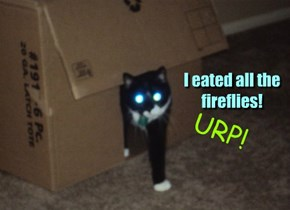 I eated all the fireflies!