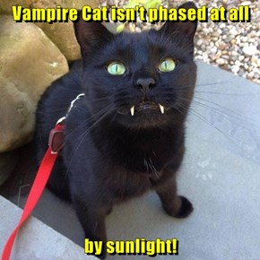 Vampire Cat isn't phased at all  by sunlight!
