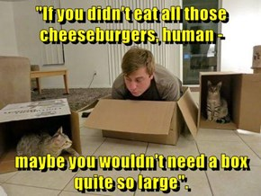 """""""If you didn't eat all those cheeseburgers, human -  maybe you wouldn't need a box quite so large""""."""