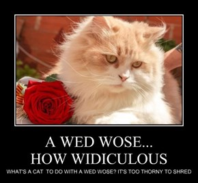 A WED WOSE... HOW WIDICULOUS